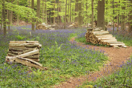 outdoor fireplace: Firewood piled up in the forest and surrounded by bluebells