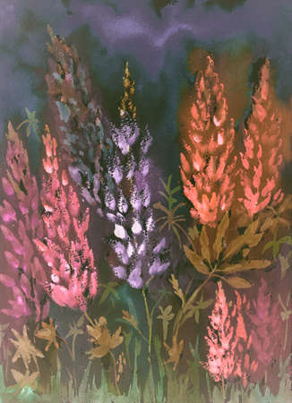 Warm nightly impression of red and purple lupines from a low viewpoint. The dabbing technique near the edges gives a soft focus effect due to the altered surface roughness of the paper. Stock Photo
