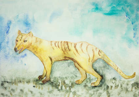 Tasmanian tiger. The dabbing technique near the edges gives a soft focus effect due to the altered surface roughness of the paper. Stock Photo