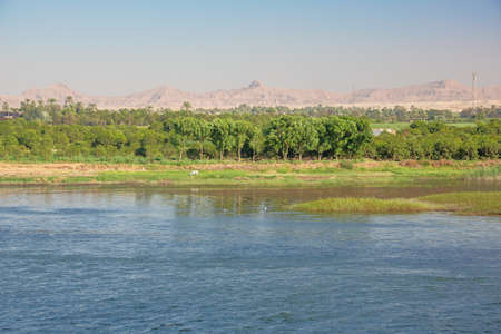 Lush vegetation in the vicinity of Armant, south of Luxor