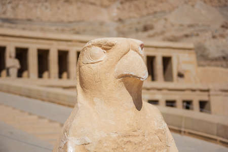 Statue of Horus at the Temple of Hatshepsut in the vicinity of Luxor