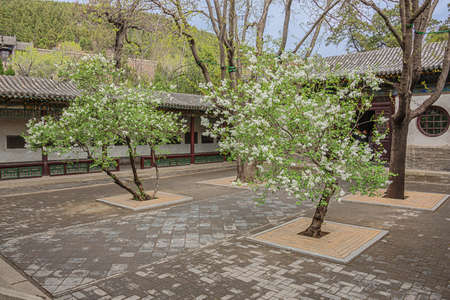 Courtyard with blossoming trees in the Jinci temple in Taiyuan