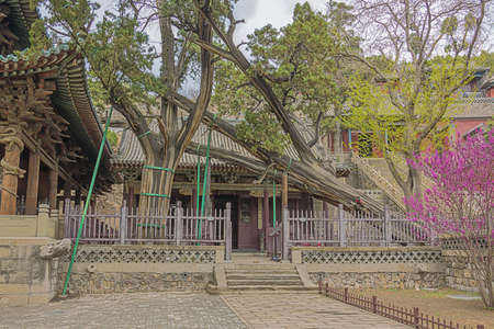 The Crouching Dragon Cypress in the Jinci temple in Taiyuan Reklamní fotografie