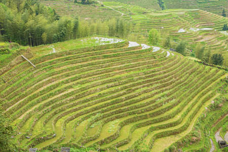 Green colored rice terraces at Pingancun village in the Longsheng area near Guilin