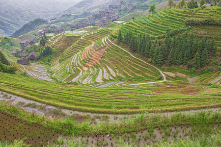 Rice terraces extending to the valley at Pingancun village in the Longsheng area near Guilin