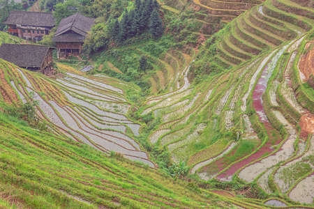 Plunging view over rice terraces at Pingancun village in the Longsheng area near Guilin