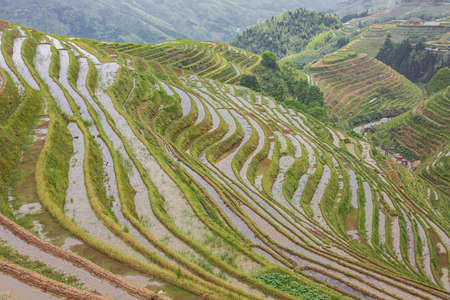 Rice terraces till the access road to Pingancun village in the Longsheng area near Guilin Stock fotó