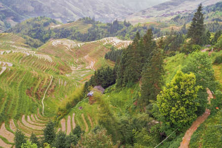 Rice fields in the hills around Pingancun village in the Longsheng area near Guilin