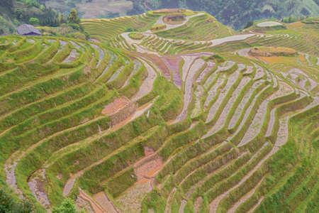 Repairing rice terraces in the hills around Pingancun village in the Longsheng area near Guilin
