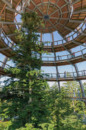 Editorial: NEUSCHONAU, BAVARIA, GERMANY, August 12, 2020 - Looking at the apex of the observation tower on the treetop walk at Neuschonau in the Bavarian Forest