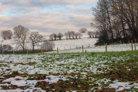 Snowy hills and bald trees in Voeren
