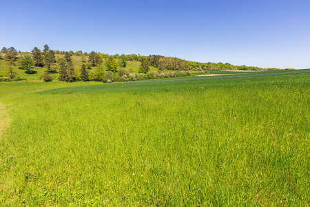 So many shades of green in the calcareous grassland next to the Fondry des chiens