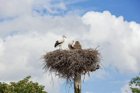 Two storks observing their surroundings from their nest above Jesus' cross at the graveyard in Muizen Standard-Bild