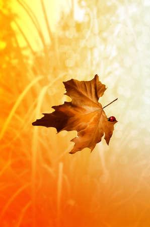 lady bug: Falling autumn leaf with lady bug