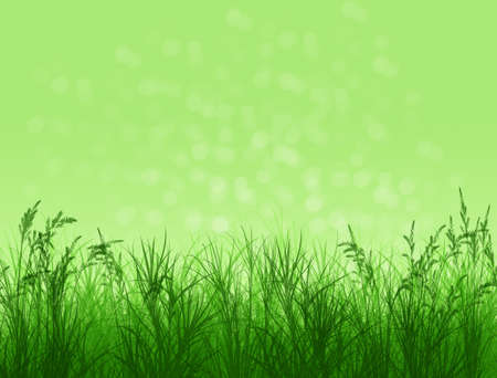 Spring background. Natural background with bokeh. Summer. A park. Regeneration. Close-up. Nature awoke. Stock Photo