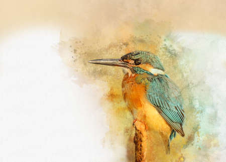 Common Kingfisher - painted with watercolor. Bird illustration Foto de archivo