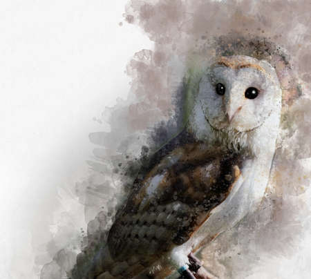 Watercolor Barn owl. Hand drawn watercolor owl perfect for design greeting card or print. Фото со стока