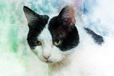 Watercolor hand painted illustration of cute black and white cat Banco de Imagens - 116012010