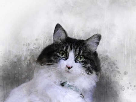 Watercolor hand painted illustration of cute black and white cat