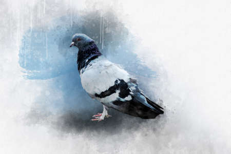 Watercolor painting of a rock dove - bird illustration