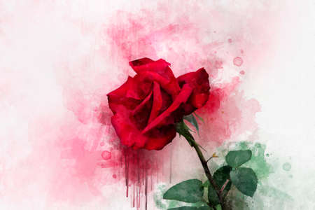 A watercolor drawing of a vibrant red rose flower. Botanical art. Decorative element for a greeting card or wedding invitation Фото со стока