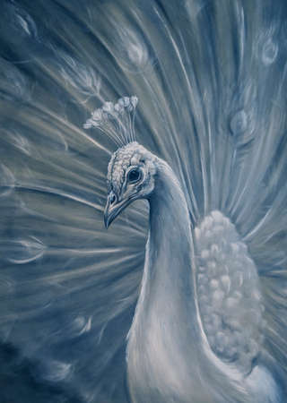 Peacock drawing. Bird Illustration of a white peacock. Pastel on paper.