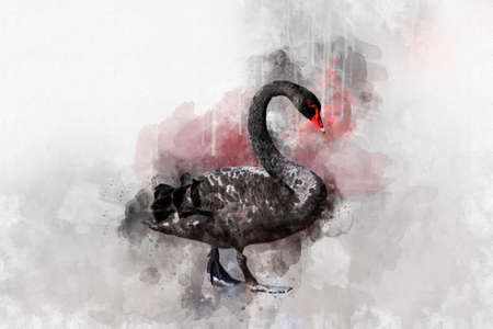 Watercolor illustration of a black swan on a white background. Swan. Watercolor bird. Stock Photo