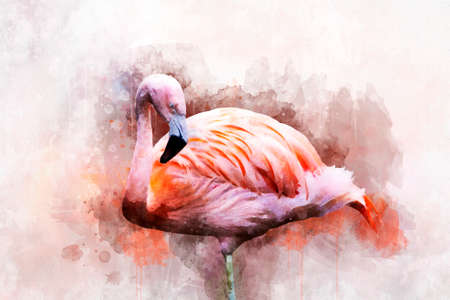 Portret of a Flamingo, watercolor painting. Red flamingo (Phoenicopterus ruber), zoological illustration, hand drawing. Foto de archivo - 130756795