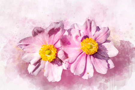 Watercolor painting of a Anemone hupehensis, known as the Chinese anemone. Botanical illustration.