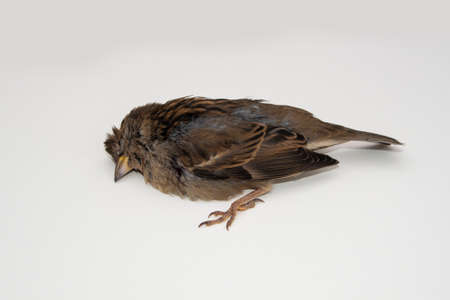 Dead bird (Young sparrow) background in nature