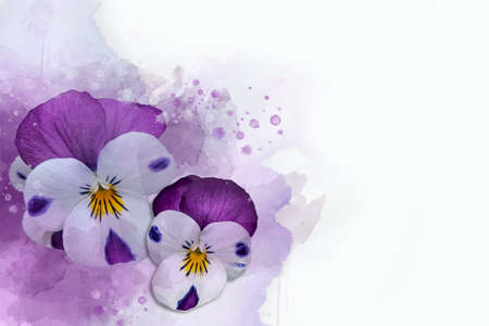 Close-up of purple pansy flowers in watercolor. Botanical illustration for greeting card. Stok Fotoğraf