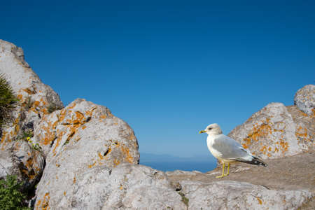 Young seagull perched and standing on sea stone wall. Juvenile seagull.