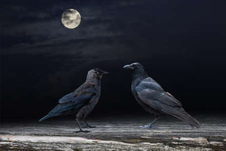 Two black raven birds perched on a wooden panel in the moonshine