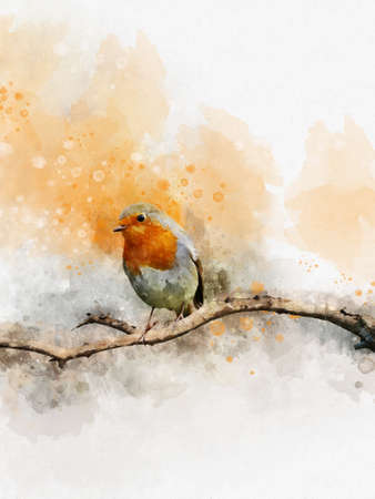 Watercolor robin redbreast. Hand painted bird isolated on white background. Wildlife illustration for design, print, fabric or background. Stockfoto