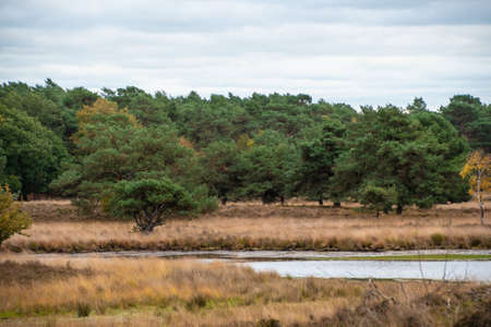 Swampland in the autumn under a cloudy sky. Fall landscape.