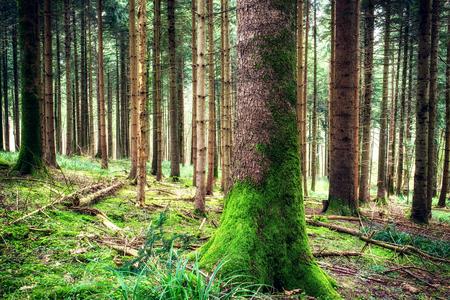 春の森林景観を松します。キャンプ場や観光の概念。