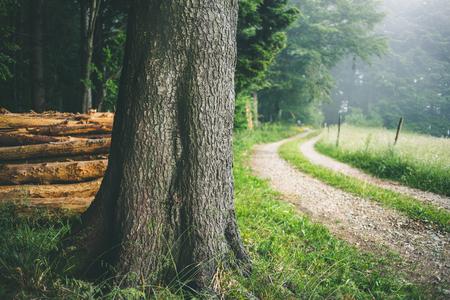 夏には大きな木の霧山の森林の国の道路。風光明媚な自然の背景。
