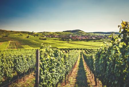 歴史的な村、民家のブドウ畑と田園風景。Kaisersuhl、ドイツ黒い森の景色。美しい夏旅行の背景。