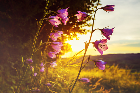 野の花に照らされて日没と山を背景に美しい田園風景の景観。