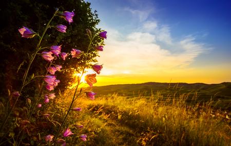 夕日と山々 を背景に照らされて花の美しい田園風景の景観。