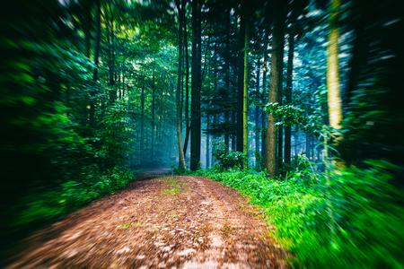 風光明媚な霧夏道と山森の背景。ハイキングのコンセプト 写真素材