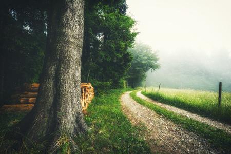 風光明媚な夏の森は、霧の国の道路のある風景します。