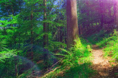 美しい山と夏の森の小道。ハイキングし、キャンプの背景。フィルター、トーンします。