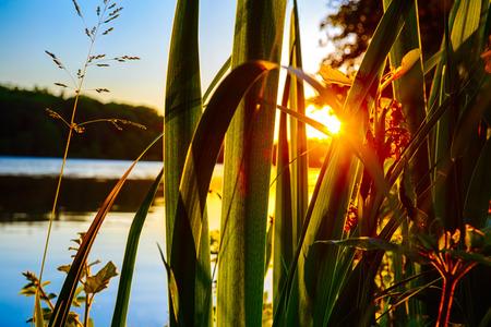 湖の夕日と美しい夏の背景。