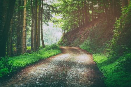 夏に山林での田舎道。風光明媚な自然の背景。ヴィンテージの効果。 写真素材