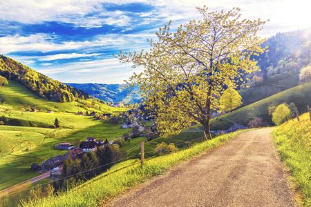 ドイツ、Muenstertal、シュヴァルツヴァルトの丘陵夏渓谷の風光明媚な風景