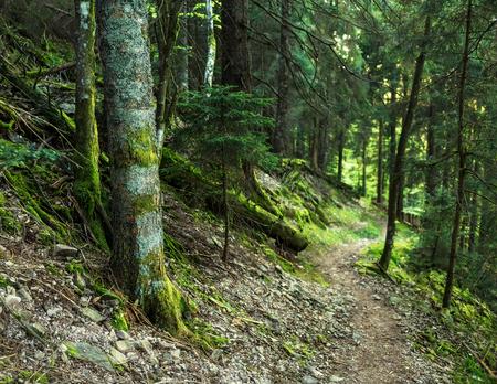 風光明媚な夏山森背景に苔むした木、パス。ハイキングのコンセプトです。 写真素材