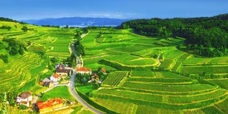 森林、民家と畑の風光明媚なパノラマ風景。ドイツの黒い森。カラフルな夏の背景。美しい旅行先。
