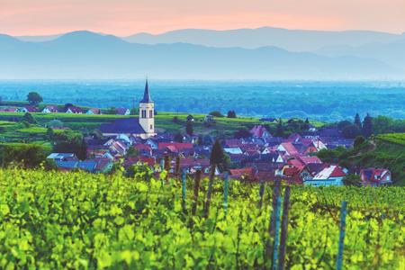 ブドウ畑と夕焼け、黒い森、ドイツの古い絵のような町 Kaiserstuhl.Travel とワイン作りの背景で美しい山の風景。 写真素材