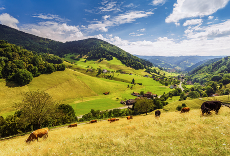 Scenic summer landscape: green mountain valley with an old historic village and grazing cows. Peaceful colorful peaceful pastoral. Travel and hiking background.